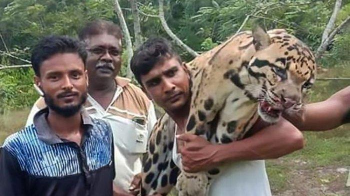 Setelah Dibunuh, Pemburu Ini Pamerkan Bangkai Macan Tutul Langka ke Facebook