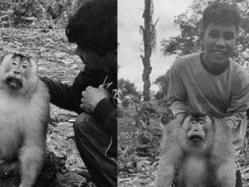 VIRAL Facebook & WhatsApp, Monyet Diburu Pakai Gigitan Anjing, Dicincang, Dimasak, Santap Rame-rame