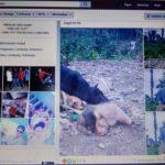 Viral Akun Facebook Pamer Monyet Berdarah-darah